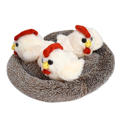 Chick Nest With 3 Chicks